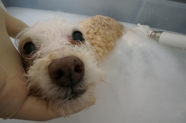 バブルでほっこり毛穴洗浄(*´Д`)♪ のほほんポッキーちゃん♥