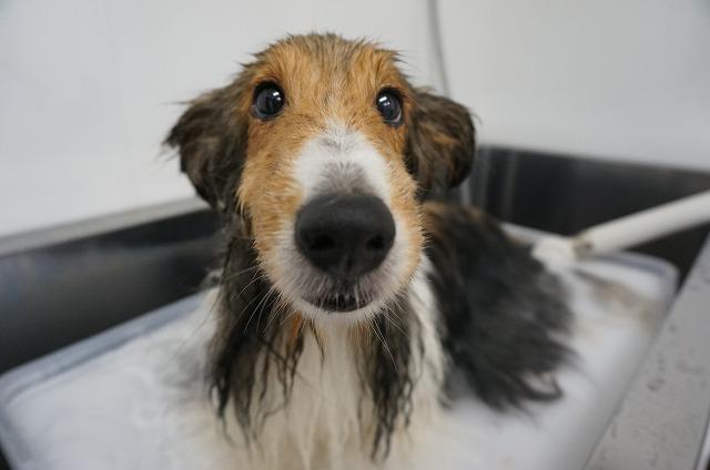 どんぶらこ~っとバブル入浴(*´Д`)♪ 毛穴の汚れをしっかり落とそうね(#^.^#)