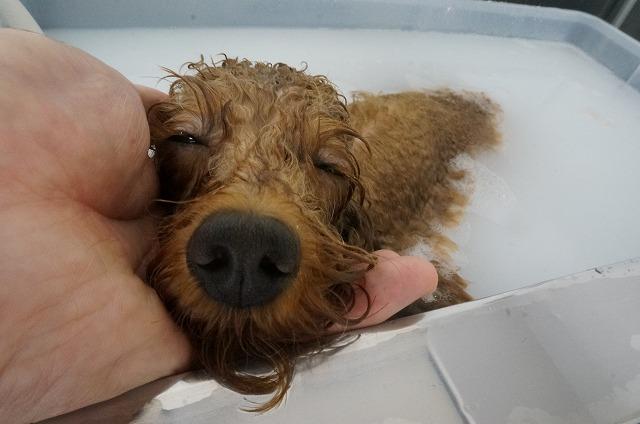 今日もバブルでウットリねむねむ顔に(*´Д`)♪ お風呂好きね~(#^.^#)