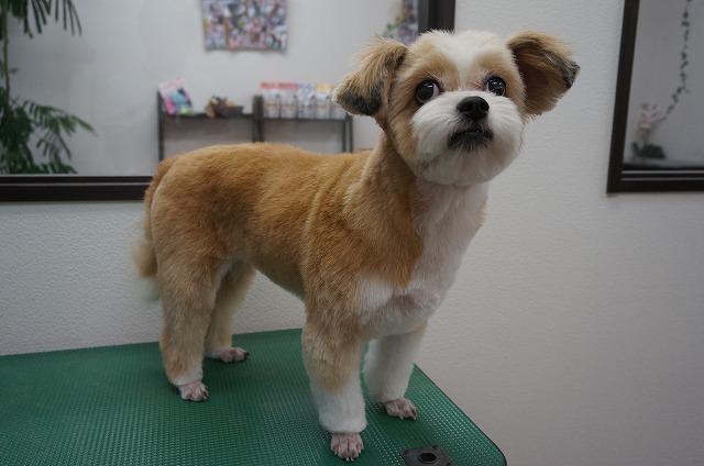 サッパリ子犬風モカちゃんに変身(*´▽`*) 愛らしいお顔が丸見えでいいね~♪♪