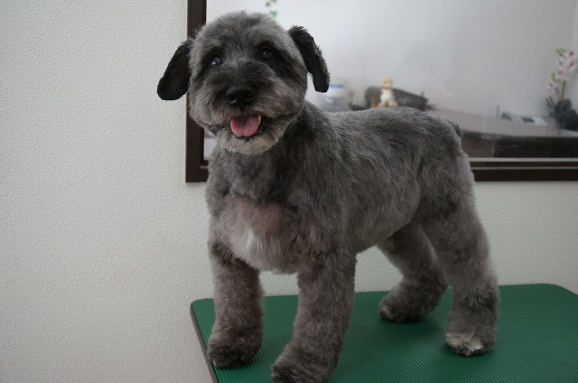 丸~っと愛らしく変身(*´▽`*) ちょっぴり子犬っぽくなってさらに魅力的BOYになりました♪♪
