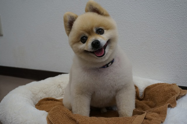 皆様良いお年を~~★ By 看板犬チップ