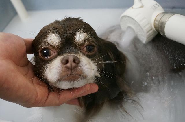 バブルでのんびり清潔に(*´Д`) どっぷり浸かっていい気分♪♪