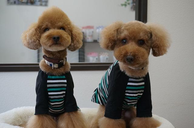 今日も揃ってお利口オシャレ~☆なリアンちゃん&ライアちゃんでした(*^^*) いつも本当にありがとう(∩´∀`)∩ お揃いファッションでひゅ~♪いかす~~♪