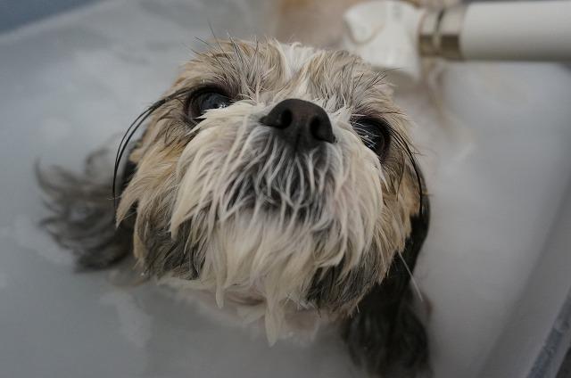 のんびりバブル入浴でお肌洗浄中(*´Д`) さらに美しくな~れ♪♪
