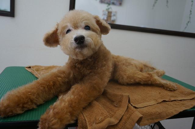 ふんわりピカピカ子犬風BOYに変身(*^▽^*) 眠気も覚めてすっきり爽快☆