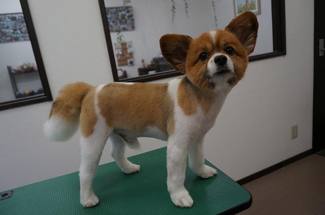 スッキリカットして子犬風ランちゃんに変身(*^▽^*) やっぱり短めのランちゃんもかなり素敵やん(*^^)v