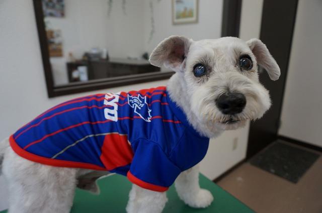 今日もションボリを乗り越えて(笑)とってもお利口さんにしてくれました(*^^)v FC東京で格好良くばいば~い♪♪