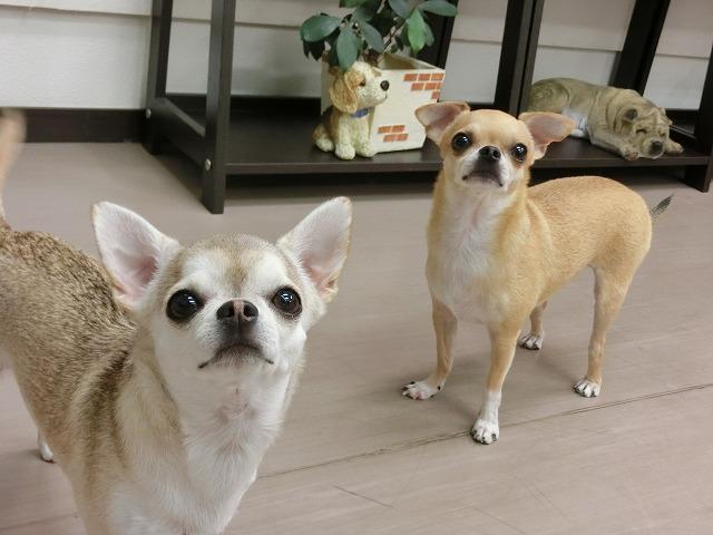 来月も家族みんなで元気良く来店して下さいね(*^^)v ジュンスちゃん、ピナちゃん、ティナちゃん、ミユちゃんお疲れ様でした(*´Д`)