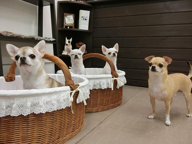 今日も一家揃ってピカテカに(*´ω`)とっても素敵な家族で萌~×4でした(*^^)v 来月も可愛らしいみんなの来店を楽しみにしてますね~(#^.^#) ティナちゃん瞑想~♪