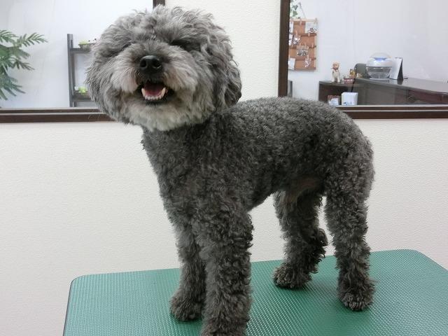 来店時のお毛毛モジャングルなトトちゃんが~~