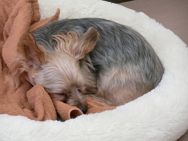 ビビちゃんが今日もの~んびり冬眠している間に~~