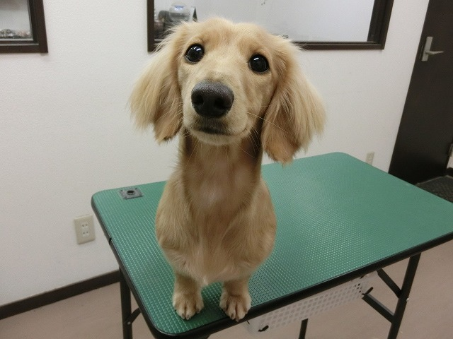 今日もレオちゃんの甘えん坊視線にポッ(*´Д`) いつまでも子犬の様な可愛らしいレオちゃんでいてもらいたいですね~♪ レオちゃんお疲れ様でした☆