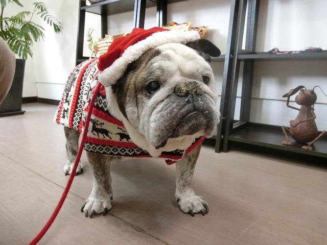 続いて慌てん坊のぶる美サンタがクリスマス前にやって来てくれました♪