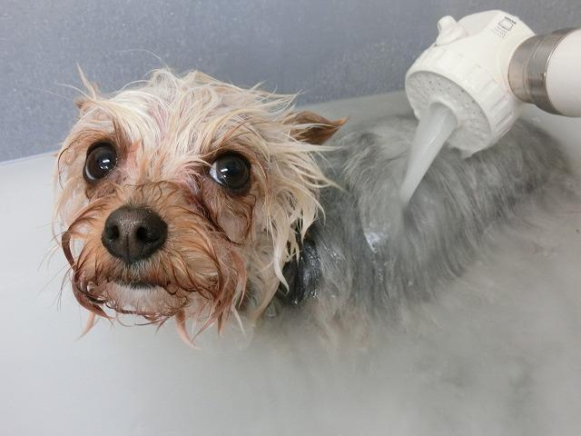 のんびりシュワ~っとバブル入浴(*´Д`) 毛穴の中から美しく♪♪