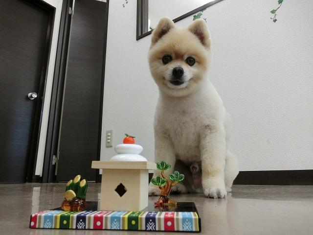今年もDogismを宜しくお願い致します!! 今日は看板犬っぽい仕事をしました!スッキリ爽快♪