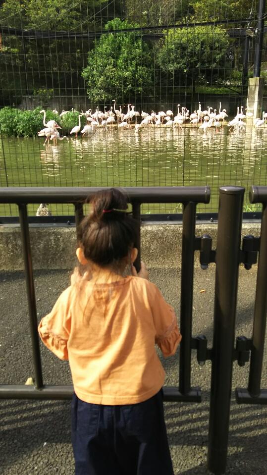 本日9月30日金曜日はお休みさせて頂きました! 娘達と多摩ZOOに行ってきました(*^^)v フラミンゴ~~♪ 本日9月30日金曜日はお休みさせて頂きました! 娘達と多摩Zoo~(*^^)v いい運動になりました フラミンゴ~~♪ アップが遅くなってしまい申し訳ありません(T_T) 9月29日来店の可愛らしいワンちゃん達を紹介します(^O^)/