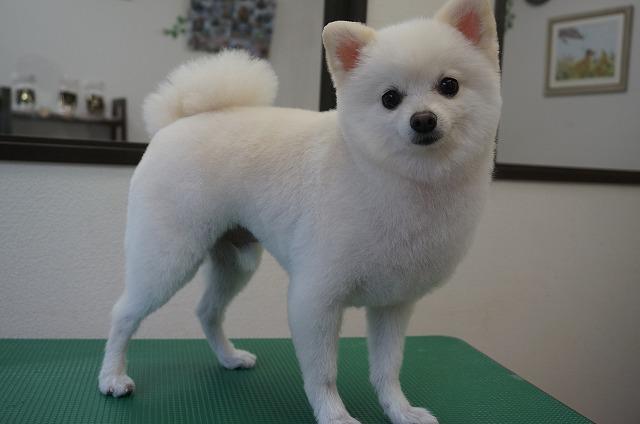 今日もスッキリ綺麗目カワカワのきゃわゆいとちゃんに(*^▽^*) ちょいふわ感を残しながら子犬風の僕ですよ~☆