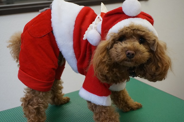 サンタや~ Dogismにもサンタが舞い降りたわ~~♪ 良い男にしてたからか~~✨