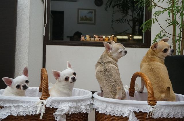 左からティアラちゃんピナちゃんミユちゃんジュンスちゃんおつでした☆ ……おしい~~~(*´Д`)