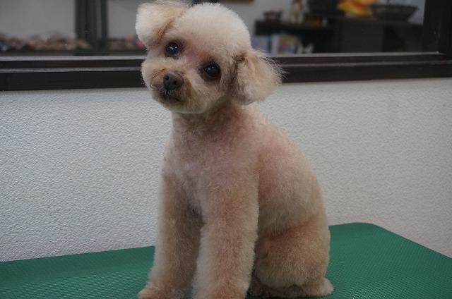 スッキリBODYの丸顔お嬢さんに(*^▽^*)お耳は短く子犬感めっちゃ出しちゃいます♪