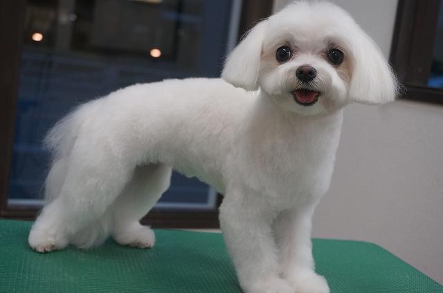 丸顔スリムなビューティーお嬢さんに変身(*´▽`*) 子犬感出して魅力あげちゃおうよ~スタイルなアメリちゃんです(*´Д`)