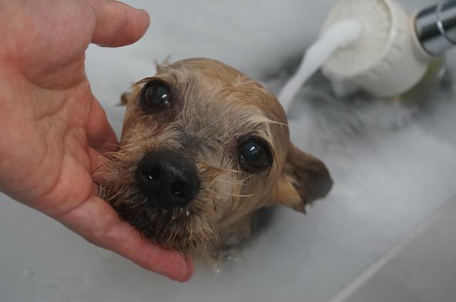 シャンプー&バブルでシュワシュワ清潔お肌サッパリ(*´Д`) のんびり入浴洗浄したら~~