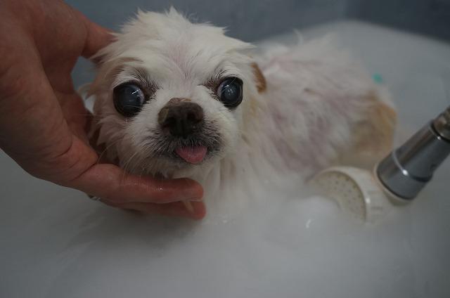 シャンプー&バブル入浴でリラックスケア~だっぴ~(*´Д`) たっぷり洗浄したら~~