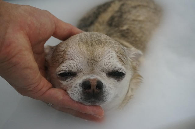 続いてママのミユちゃん☆ ど~~っぷり入浴でウットリ洗浄いい気分(*´Д`) ピカピカフルケア~したら~~