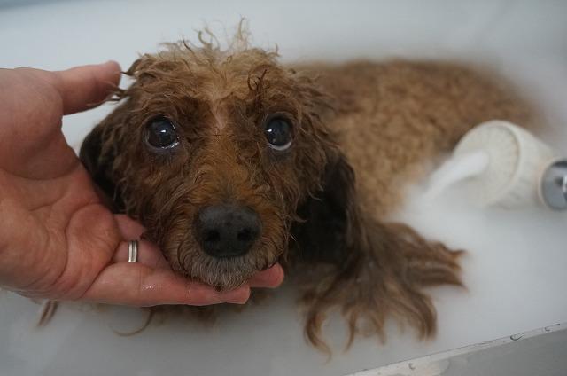 バブルど~っぷり入浴でシュワワ~洗浄(*´Д`) ちらり~っと可愛い視線をくれながらほっこりしたら~~