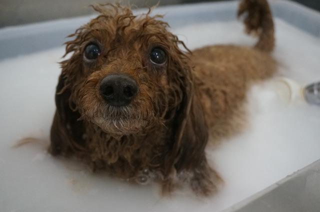 シャンプー&バブル入浴でしゅわわ~サッパリ毛穴ぴかBOYに(*´▽`*) どっぷりのんびり洗浄したら~~