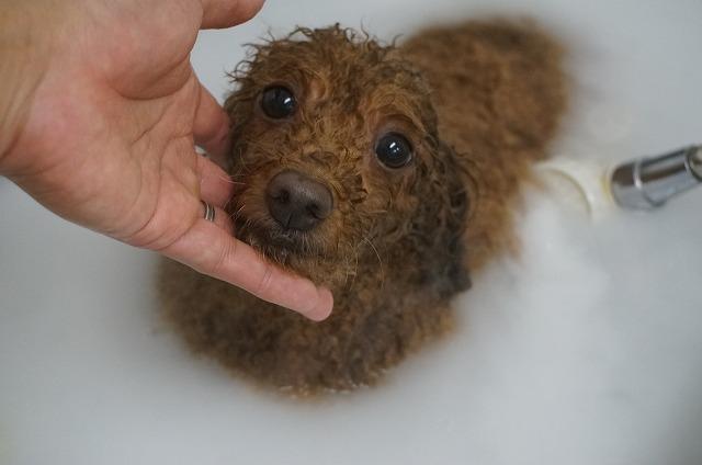 シャンプー&バブル入浴でほっかほかしゅわしゅわフル洗浄(*´Д`) のんびりほっこり入浴したら~~
