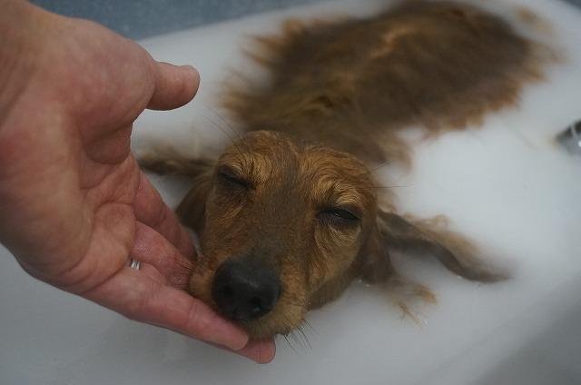 バブル入浴で清潔美肌BOYに(*´▽`*) う~~んう~~ん♪しながらほっこり洗浄したら~~