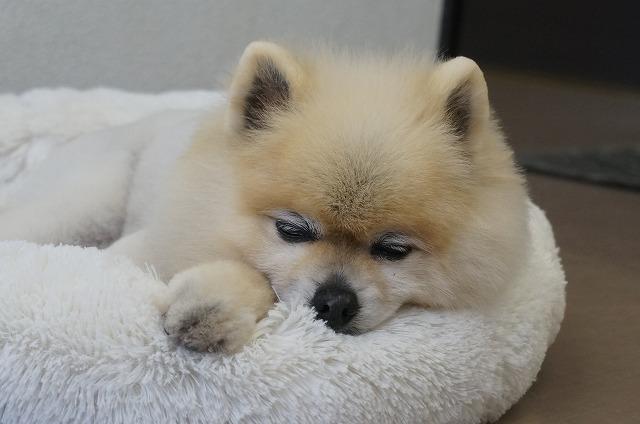 眠く…な、Zzz