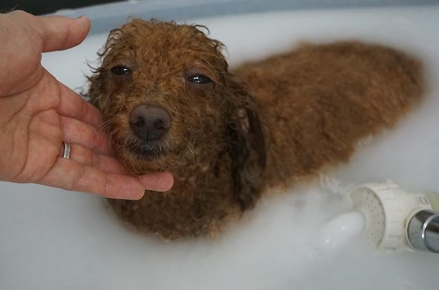 バブル入浴でほへほへいい気分(*´Д`) たっぷりサッパリ洗浄したら~~