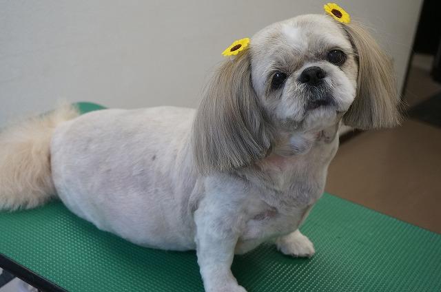 サッパリBODYのお美女ぺこちゃんに(*´▽`*) 今日ももちろんおまつ毛残しのチャーミング仕様です✨