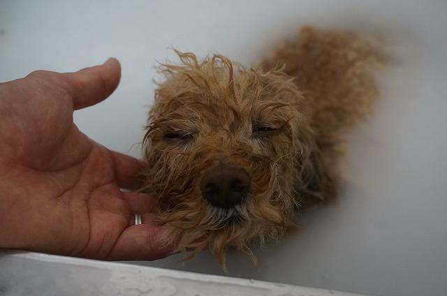 シャンプー&バブル入浴でウットリことことスキンケアー(*´Д`) たっぷりウ~ムム~♪洗浄したら~~
