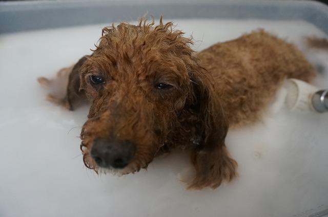 バブル入浴ほよよ~ 気分ナイス~(*´Д`) どっぷり浸かって毛穴ピカったら~~
