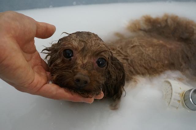 バブル入浴で清潔女子磨き(*´Д`) のんびりホクホク♪洗浄したら~~