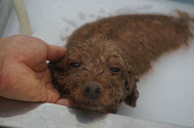 バブルどっぷり入浴でコトコトハニーやん♪ のほほんシュワシュワ毛穴洗浄したら~~