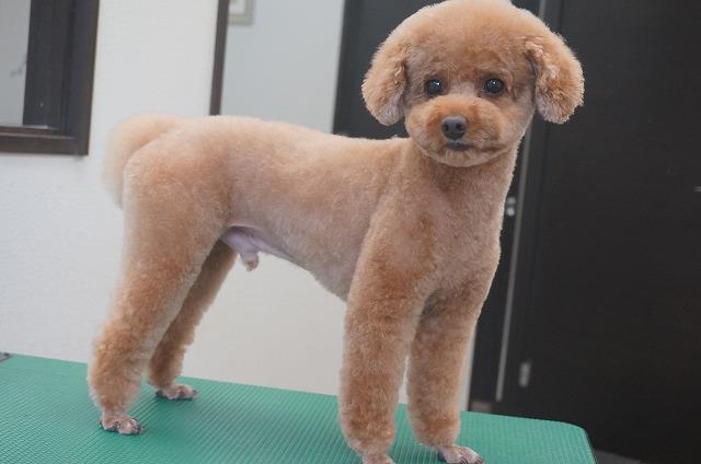 チビアフロスタイルの美男子くんに(#^.^#) さらに可愛らしく子犬に間違われちゃう僕ですよ~☆