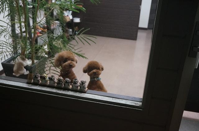 外から見てみました… お迎え待ち……