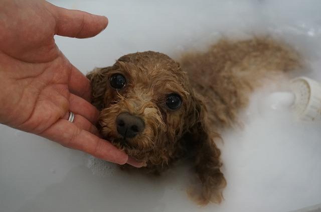 シャンプー&バブルでどっぷり入浴いい気分(#^.^#) たっぷり洗浄してピカBODYになったら~~