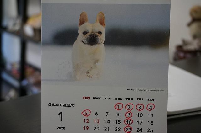 来年のからは再び夏彦くんカレンダーにします! 写真は晴彦くんですけど(*^^)v シャバーニ先輩おつ♪ 11月20日来店のワンちゃん達を紹介します(^^)/