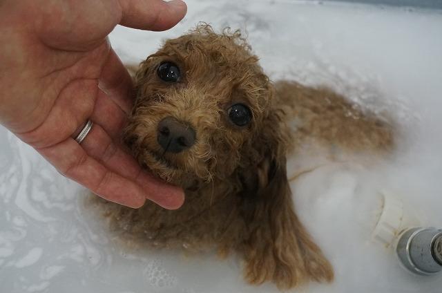 バブル入浴でシュワぴか~っと女子磨きバッチリ(*´ω`)