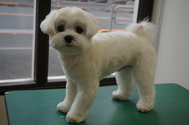 今日もスッキリカットで軽やか丸顔BOYに変身(*´ω`) 子犬感+で僕の魅力スーパーさ~☆