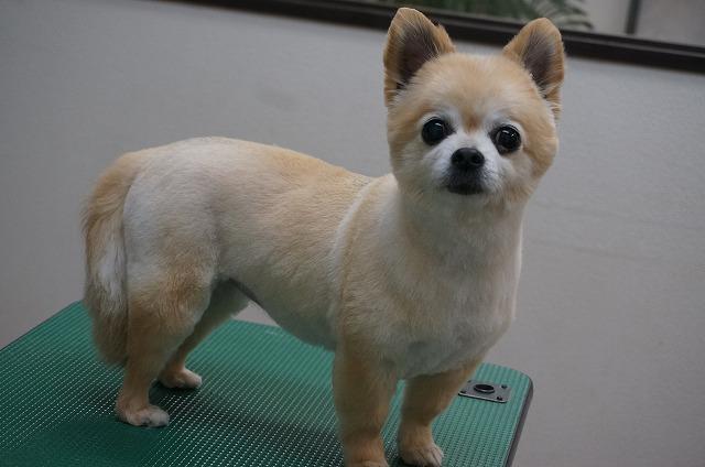 バトンちゃんと同じくシャキぷりっとした子犬風美女スタイルでキメ(*´Д`)